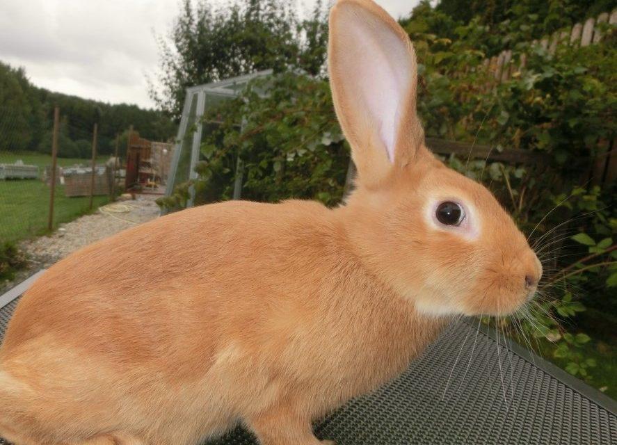 Obávam sa, že chovné králiky to majú v EÚ spočítané. Teraz vážne, uznesenie Europarlamentu k chovným králikom by ani v RVHP nevymysleli