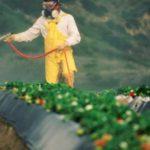 Pesticídy Monsanta či genocída?