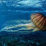 VIDEO: Obrie medúzy pod arktickým ľadom zaskočili vedcov