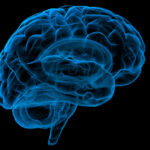Boli objavené prvé dôkazy o systéme vylučovania odpadu v ľudskom mozgu
