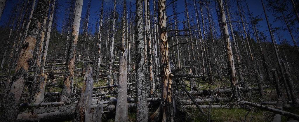 Pravda o lese: Viete, včom je Slovensko najlepšie vEurópe?