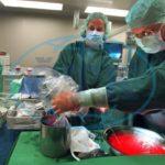 Holanďania schválili zákon, podľa ktorého sú všetci dospelí darcami orgánov