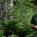 Video: Čertovica - Slovenská lesnícka komora